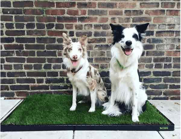 XL DoggieLawn